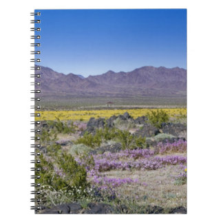 Sand Verbena & Desert Gold at Amboy Crater, CA, Notebook