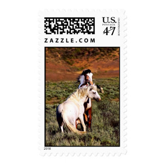 Sand Wash Basin Fighting Stallions Postage