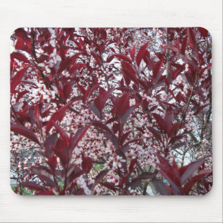 Sandcherry Abstract Mousepad