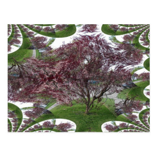 Sandcherry Fractal Traced Tree Postcard
