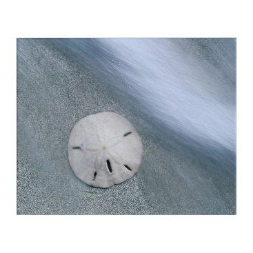 Beach Themed Sanddollar on Beach | Sanibel Island, Florida Acrylic Print