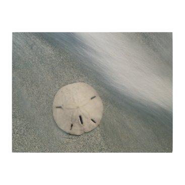 Beach Themed Sanddollar on Beach | Sanibel Island, Florida Wood Print