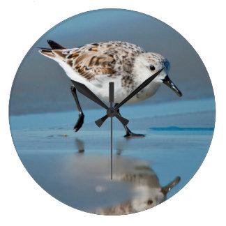 Sanderling Calidris Albe Feeding On Wet Beach Clocks