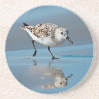 Sanderling Calidris Albe Feeding On Wet Beach Drink Coasters