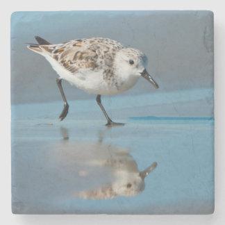 Sanderling Calidris Albe Feeding On Wet Beach Stone Coaster