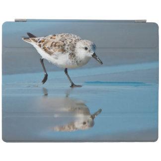 Sanderling (Calidris Albe) Feeding On Wet Beach iPad Cover
