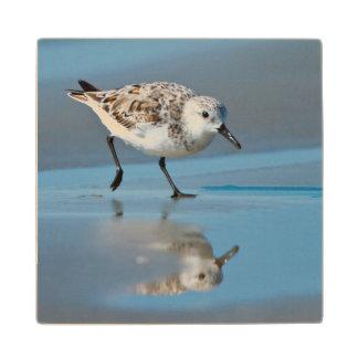 Sanderling Calidris Albe Feeding On Wet Beach Maple Wood Coaster