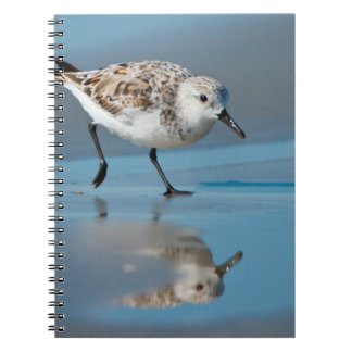 Sanderling Calidris Albe Feeding On Wet Beach Spiral Notebook