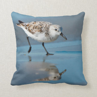 Sanderling Calidris Albe Feeding On Wet Beach Pillows