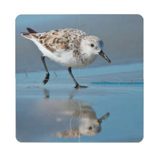 Sanderling Calidris Albe Feeding On Wet Beach Puzzle Coaster