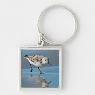Sanderling (Calidris Albe) Feeding On Wet Beach Silver-Colored Square Keychain
