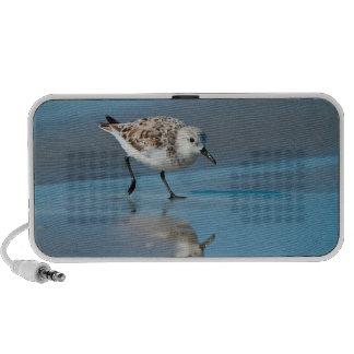 Sanderling Calidris Albe Feeding On Wet Beach Laptop Speaker