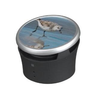 Sanderling (Calidris Albe) Feeding On Wet Beach Speaker