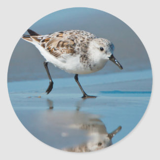 Sanderling Calidris Albe Feeding On Wet Beach Round Stickers