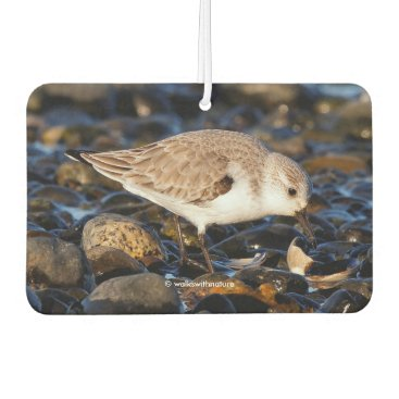 Beach Themed Sanderling Dining on Clam Car Air Freshener
