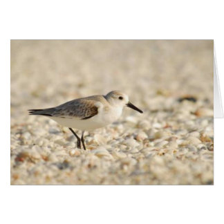 Sanderling on the Beach, marco Island, Florida Card