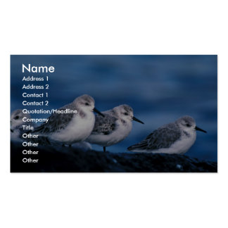 Sanderlings, Adak Island, non-breeding plumage Business Cards