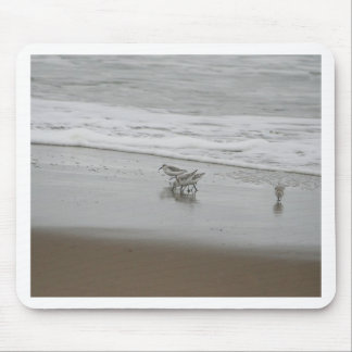 Sanderlings at Horsfall Beach, Oregon Mouse Pads