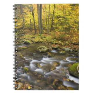 Sanderson Brook.  Chester-Blanford State Forest. Notebook