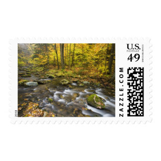 Sanderson Brook.  Chester-Blanford State Forest. Postage