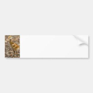 Sandhill Crane Baby Car Bumper Sticker