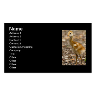 Sandhill Crane Baby Double-Sided Standard Business Cards (Pack Of 100)