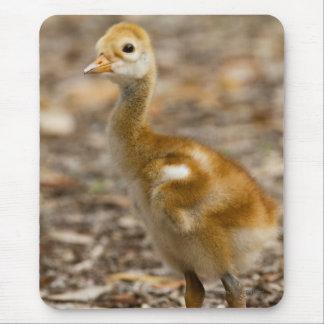 Sandhill Crane Baby Mouse Pad
