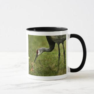 Sandhill Crane & Baby mug
