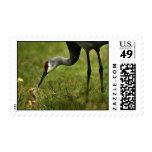 Sandhill Crane & Baby Postage Stamp