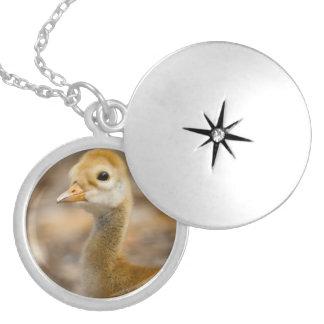 Sandhill Crane Baby Round Locket Necklace
