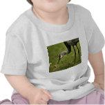 Sandhill Crane & Baby T-shirts