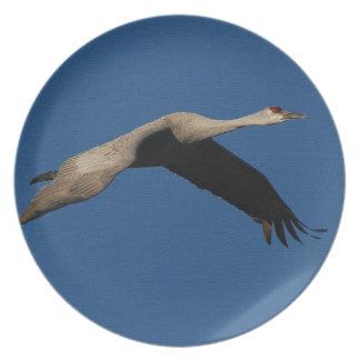 Sandhill Crane Bird Wildlife Animal Dinner Plate