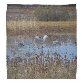 Sandhill Crane Birds Bandana