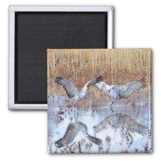 Sandhill Crane Birds Dance Wildlife Animals Magnet