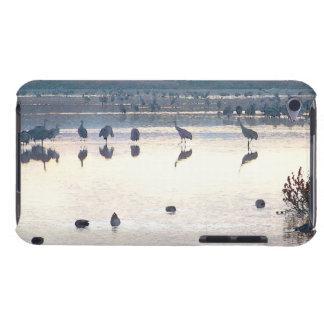 Sandhill Crane Birds Wildlife Animals Barely There iPod Case