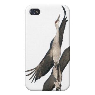 Sandhill Crane Birds Wildlife Animals Cover For iPhone 4