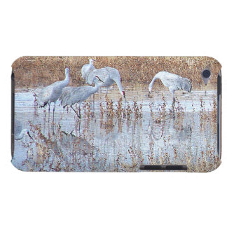 Sandhill Crane Birds Wildlife Animals iPod Touch Cover
