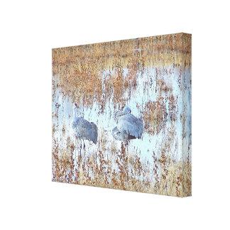 Sandhill Crane Birds Wildlife Animals Photography Canvas Print