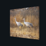 """Sandhill Crane Birds Wildlife Animals Photography Canvas Print<br><div class=""""desc"""">Awesome Wrapped Canvas Print of a scene with Sandhill Cranes  at Bosque del Apache National Wildlife Refuge in New Mexico,  for your wall,  in very colossal size.  This is a digital painting.</div>"""
