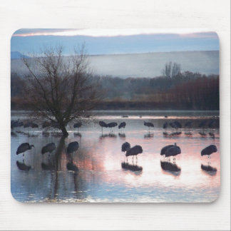 Sandhill Crane Birds Wildlife Animals Photography Mouse Pad