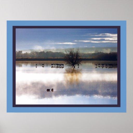 Sandhill Crane Birds Wildlife Animals Photography Poster