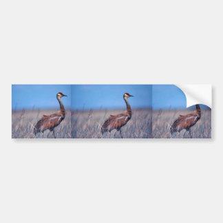 Sandhill Crane Car Bumper Sticker