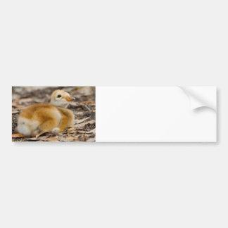 Sandhill Crane Chick Car Bumper Sticker