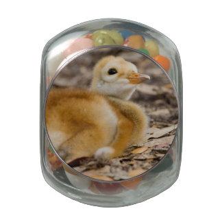 Sandhill Crane Chick Glass Jar