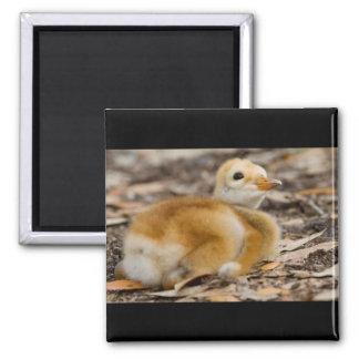 Sandhill Crane Chick Refrigerator Magnet