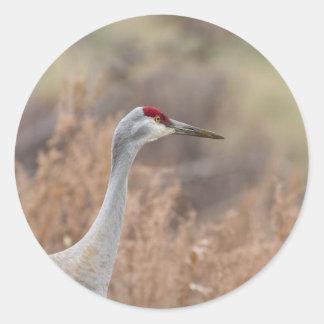 Sandhill Crane Classic Round Sticker