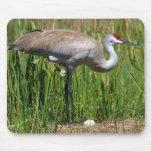 Sandhill Crane & Egg mousepad