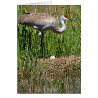 Sandhill Crane & Egg note card