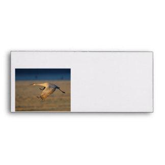 sandhill crane envelope