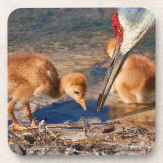 Sandhill Crane Family with Worm Coaster Set